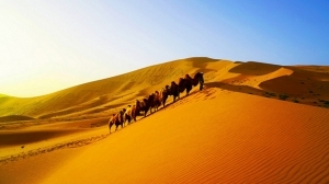 Camel Riding 17 Days