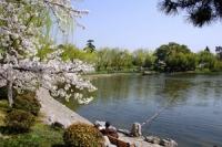 Xuanwu Lake, Xuanwu Lake Guide, Xuanwu Lake Travel Tips, Xuanwu Lake Travel Information.