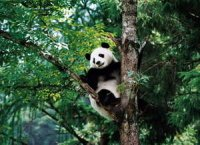 Chengdu Attractions Guide