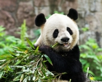 Introducing Chengdu, Introduction of Chengdu, Brief Introduction to Chengdu, Chengdu Travel Guide.